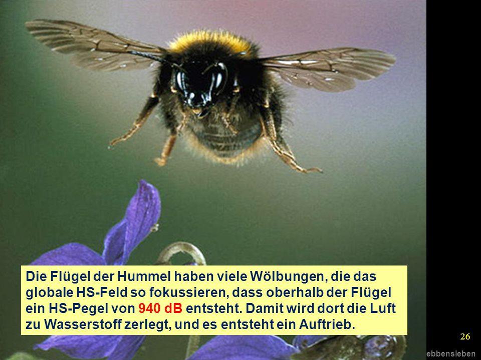 © R.Gebbensleben 26 Die Flügel der Hummel haben viele Wölbungen, die das globale HS-Feld so fokussieren, dass oberhalb der Flügel ein HS-Pegel von 940