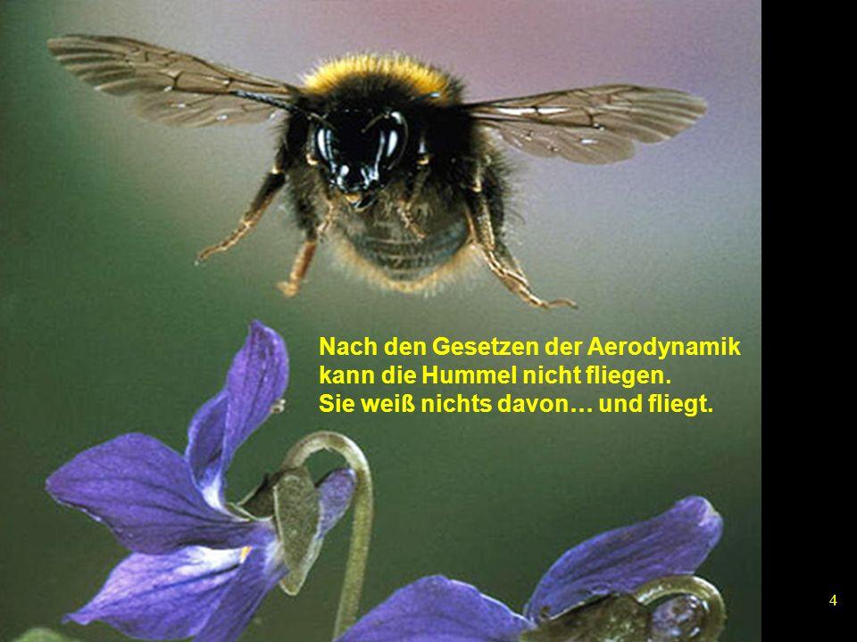 4 Nach den Gesetzen der Aerodynamik kann die Hummel nicht fliegen. Sie weiß nichts davon… und fliegt.
