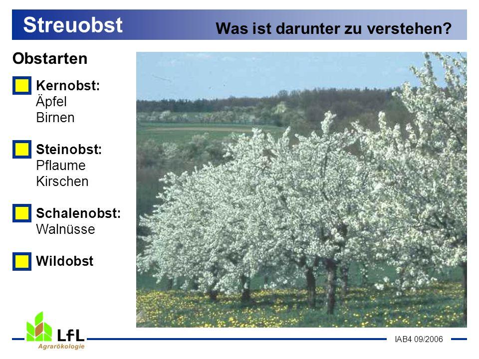 IAB4 09/2006 Obstarten Streuobst Was ist darunter zu verstehen? Kernobst: Äpfel Birnen Steinobst: Pflaume Kirschen Schalenobst: Walnüsse Wildobst