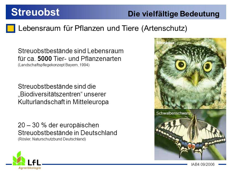 IAB4 09/2006 Lebensraum für Pflanzen und Tiere (Artenschutz) Streuobst Die vielfältige Bedeutung Schwalbenschwanz Steinkauz Streuobstbestände sind Leb