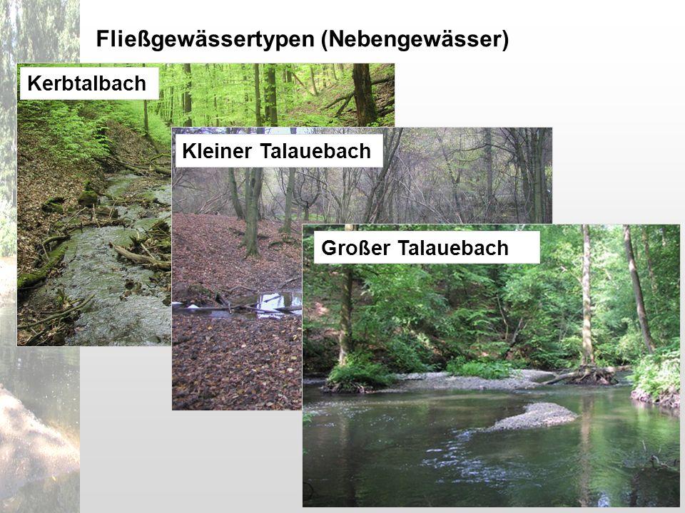 Kerbtalbach Fließgewässertypen (Nebengewässer) Kleiner Talauebach Großer Talauebach