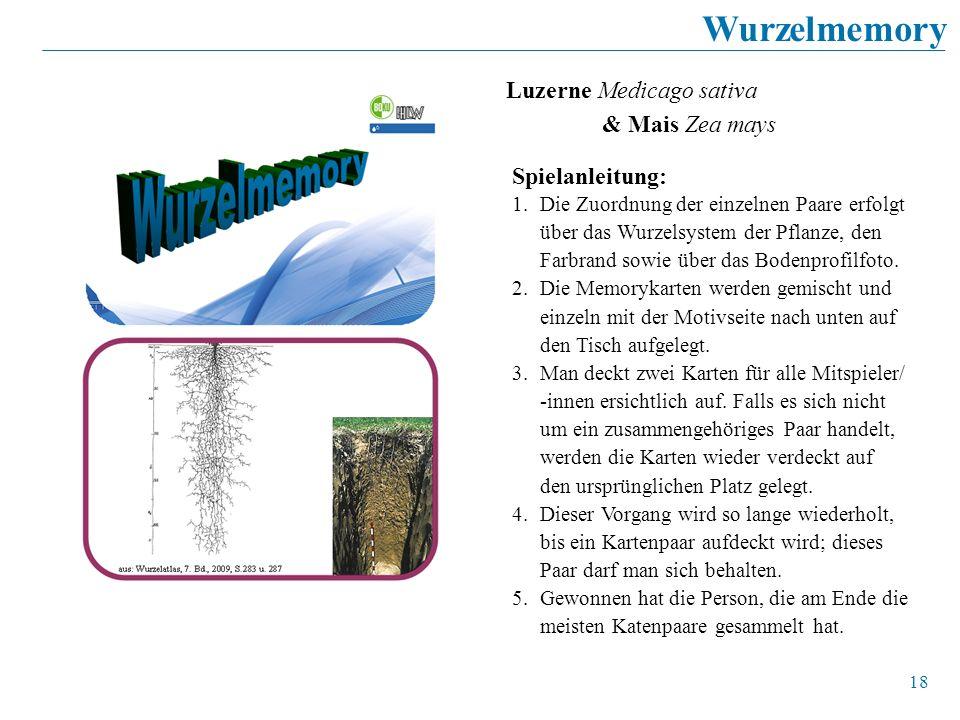 18 Wurzelmemory Luzerne Medicago sativa & Mais Zea mays Spielanleitung: 1.Die Zuordnung der einzelnen Paare erfolgt über das Wurzelsystem der Pflanze,