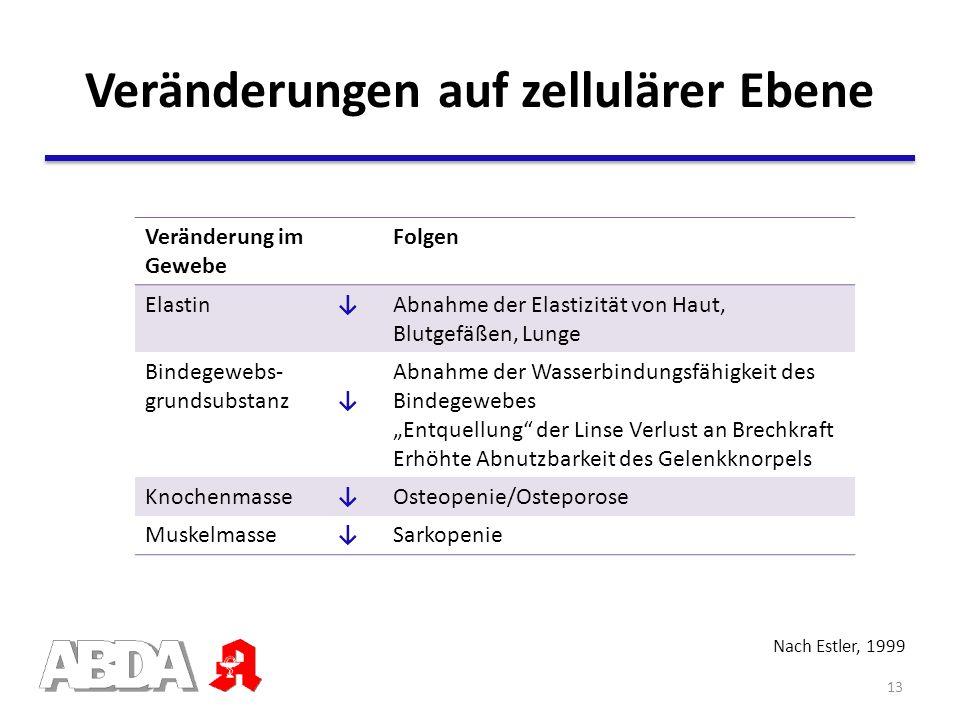 Nach Estler, 1999 Veränderung im Gewebe Folgen ElastinAbnahme der Elastizität von Haut, Blutgefäßen, Lunge Bindegewebs- grundsubstanz Abnahme der Wass