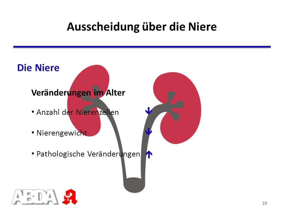 Die Niere Veränderungen im Alter Anzahl der Nierenzellen Nierengewicht Pathologische Veränderungen Ausscheidung über die Niere 25