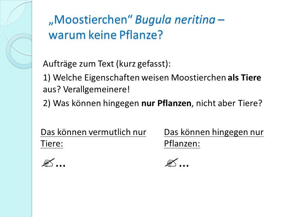 Moostierchen Bugula neritina – warum keine Pflanze? Das können vermutlich nur Tiere: … Das können hingegen nur Pflanzen: … Aufträge zum Text (kurz gef