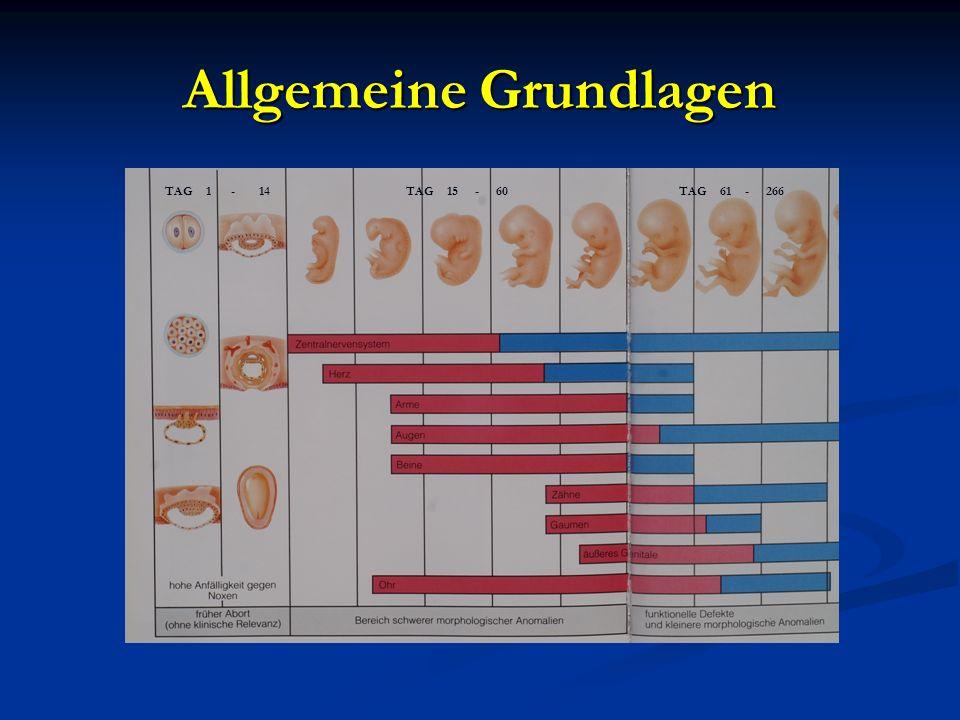 Allgemeine Grundlagen TAG 1 - 14TAG 15 - 60TAG 61 - 266