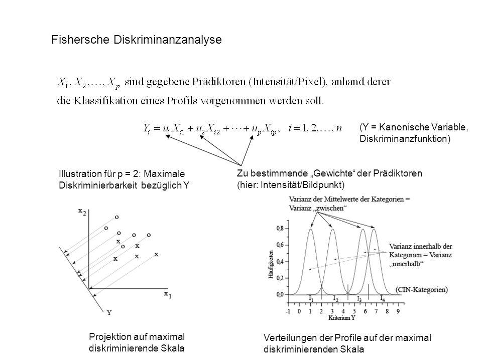 Fishersche Diskriminanzanalyse Illustration für p = 2: Maximale Diskriminierbarkeit bezüglich Y Zu bestimmende Gewichte der Prädiktoren (hier: Intensi