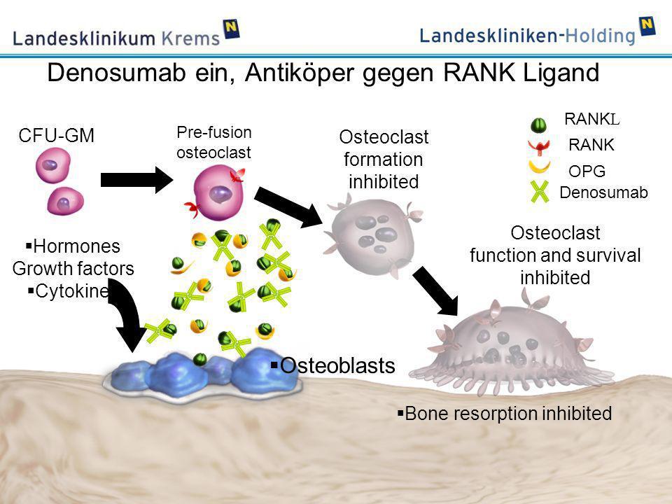 www.lknoe.at Denosumab ein, Antiköper gegen RANK Ligand Hormones Growth factors Cytokines Bone resorption inhibited CFU-GM Pre-fusion osteoclast Osteo