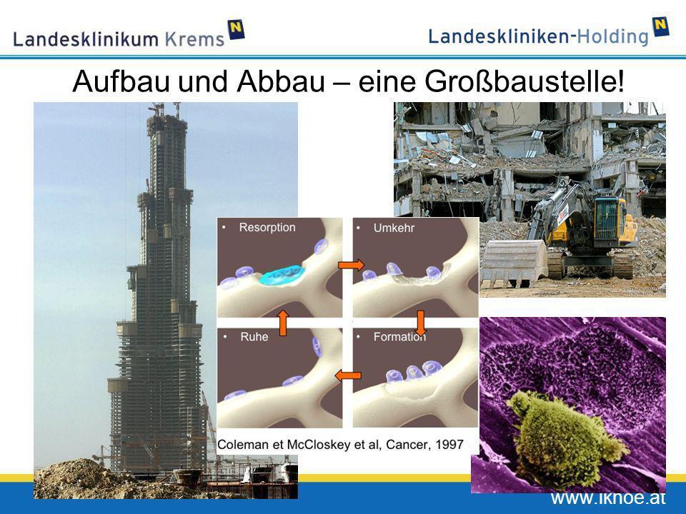 www.lknoe.at Aufbau und Abbau – eine Großbaustelle!