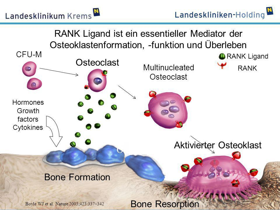 Die Hypothese des Teufelskreises der Kommunikation Tumor - Knochen PTHrP, BMP, TGF-β, IGF, FGF, VEGF, ET1, WNT Osteoblasts Activated osteoclast PDGF, BMPs TGF-β, IGFs FGFs Tumour cell CA +2 RANKL RANK OPG adapted from Roodman D, N Engl J Med 2004; 350:1655.