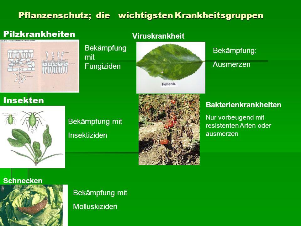 Pflanzenschutz; die wichtigsten Krankheitsgruppen Pilzkrankheiten Insekten Bekämpfung mit Fungiziden Bekämpfung mit Insektiziden Schnecken Bekämpfung