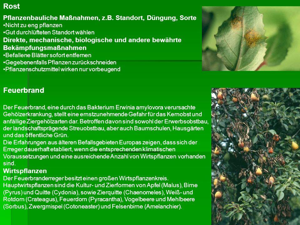 Rost Pflanzenbauliche Maßnahmen, z.B. Standort, Düngung, Sorte Nicht zu eng pflanzen Gut durchlüfteten Standort wählen Direkte, mechanische, biologisc