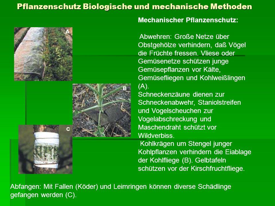 Pflanzenschutz Biologische und mechanische Methoden Mechanischer Pflanzenschutz: Abwehren: Große Netze über Obstgehölze verhindern, daß Vögel die Früc