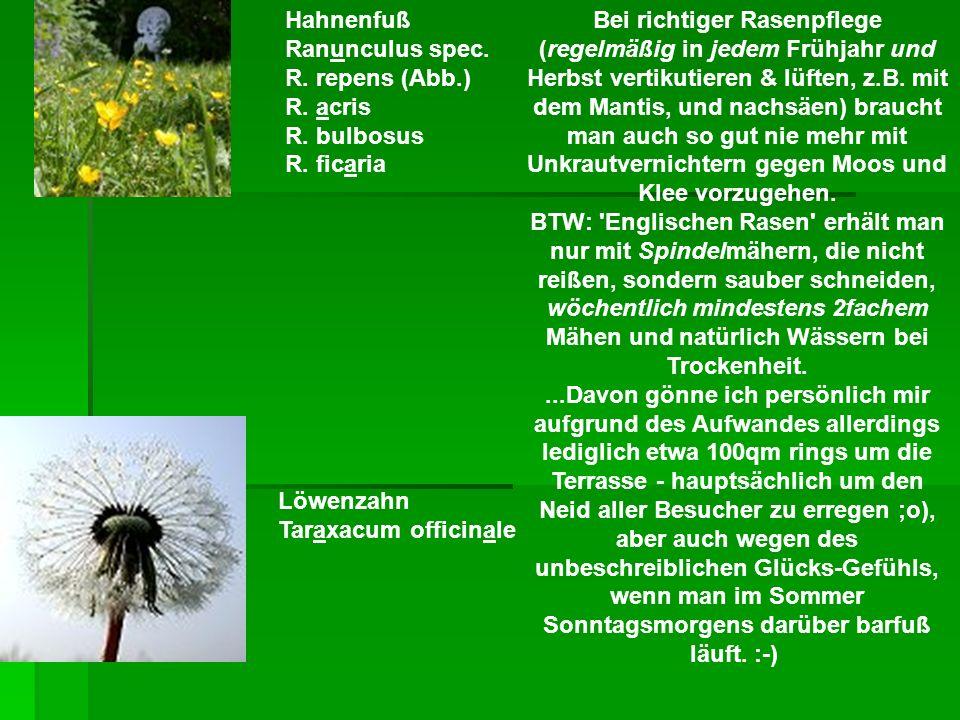 Bei richtiger Rasenpflege (regelmäßig in jedem Frühjahr und Herbst vertikutieren & lüften, z.B. mit dem Mantis, und nachsäen) braucht man auch so gut