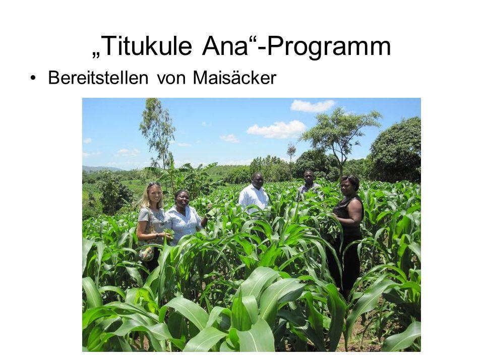 Titukule Ana-Programm Bereitstellen von Maisäcker (Foto)