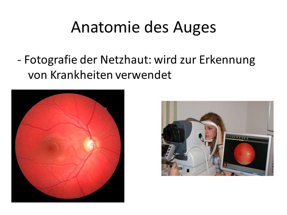 Anatomie des Auges - Fotografie der Netzhaut: wird zur Erkennung von Krankheiten verwendet