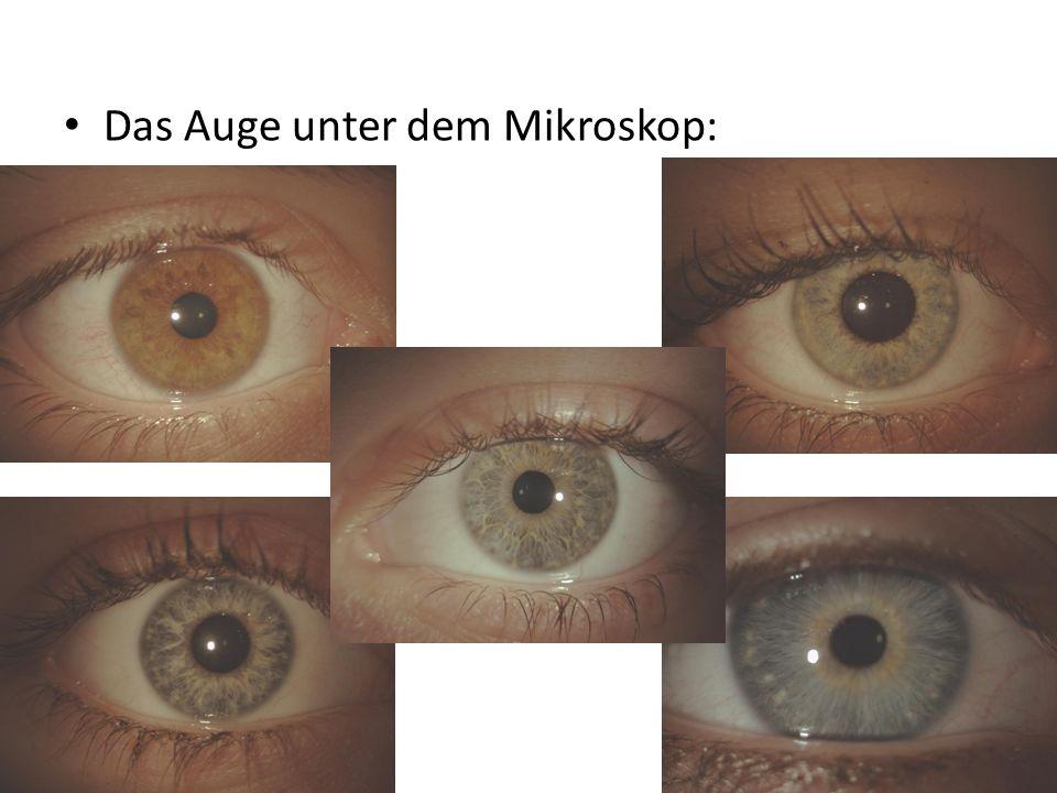 Das Auge unter dem Mikroskop: