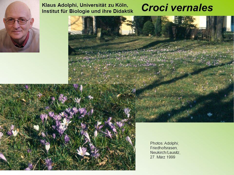 Frühjahrskrokusse Vier Crocus-Arten, die im Frühjahr blühen, kommen im Rheinland wildwachsend vor.