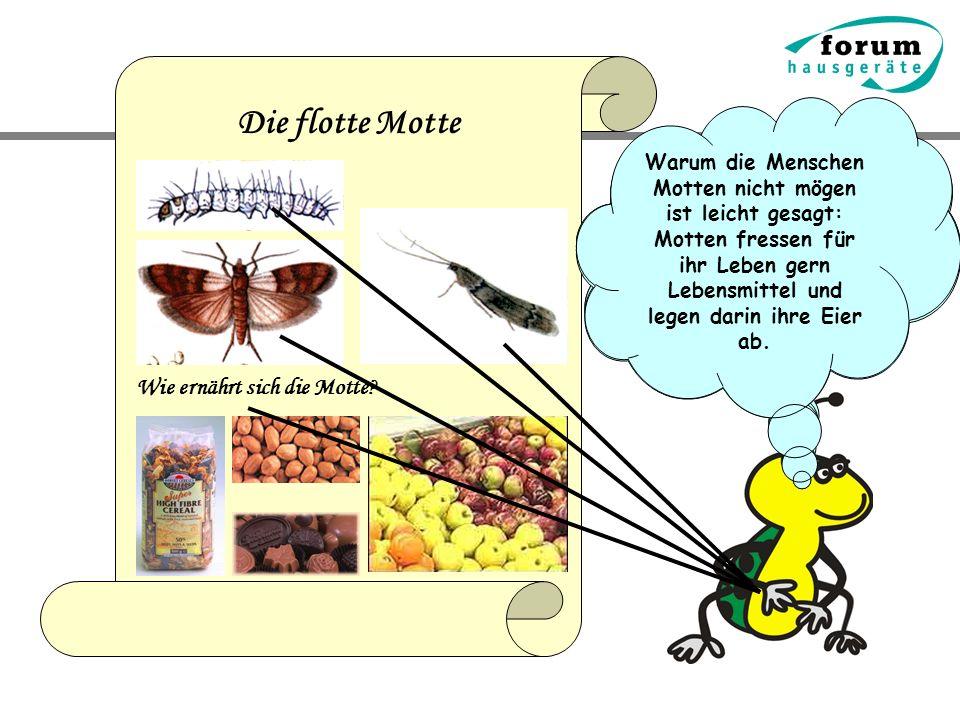 Die flotte Motte Wie ernährt sich die Motte? Die Motte gehört auch zu meinen Freunden, obwohl das viele Menschen nicht so ganz verstehen – die mögen n