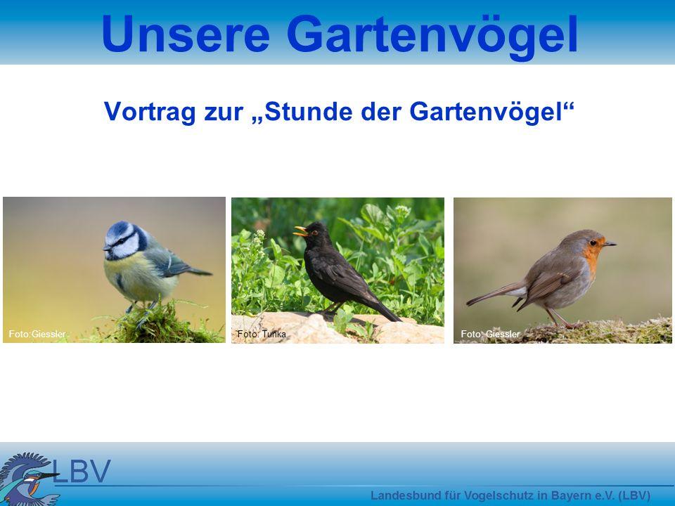 Unsere Gartenvögel Vortrag zur Stunde der Gartenvögel Foto:GiesslerFoto: TunkaFoto: Giessler