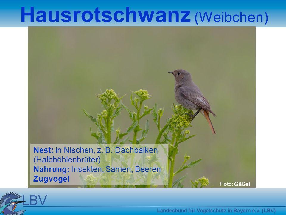 Foto: Gäßel Nest: in Nischen, z.B.