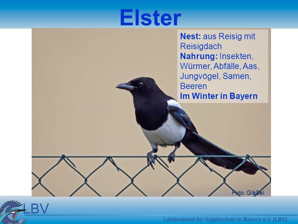 Foto: Tunka Mauersegler Nest: sehr einfaches Nest in Mauerritzen Nahrung: kleine Fluginsekten Zugvogel
