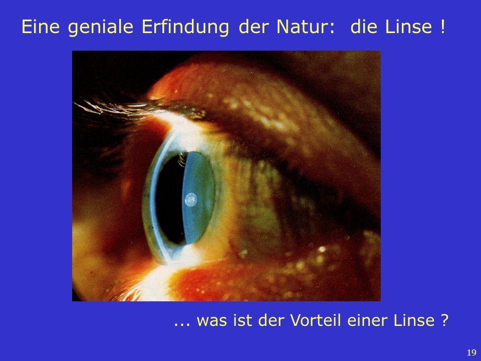 19 Eine geniale Erfindung der Natur: die Linse !... was ist der Vorteil einer Linse ?