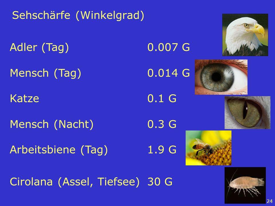 24 Sehschärfe (Winkelgrad) Adler (Tag)0.007 G Mensch (Tag)0.014 G Katze0.1 G Mensch (Nacht)0.3 G Arbeitsbiene (Tag)1.9 G Cirolana (Assel, Tiefsee)30 G