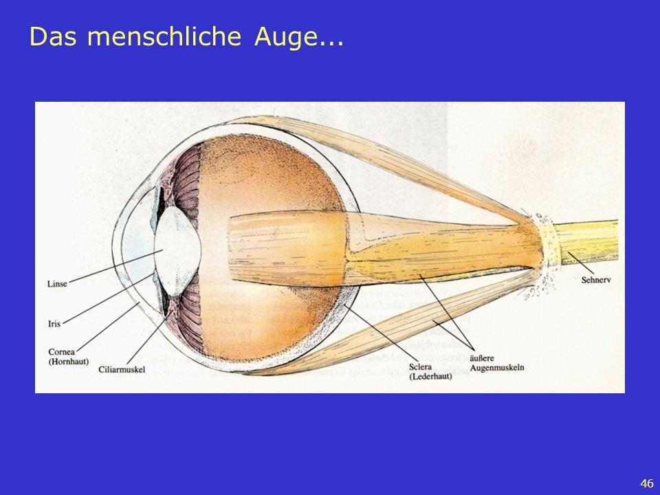 46 Das menschliche Auge...