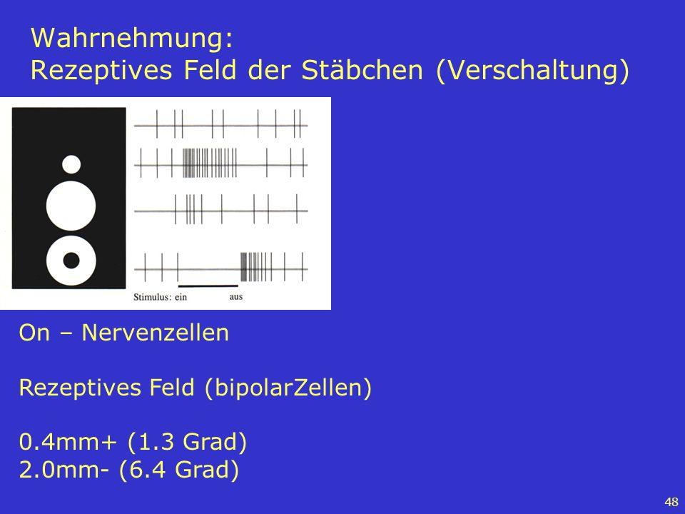 48 Wahrnehmung: Rezeptives Feld der Stäbchen (Verschaltung) On – Nervenzellen Rezeptives Feld (bipolarZellen) 0.4mm+ (1.3 Grad) 2.0mm- (6.4 Grad)
