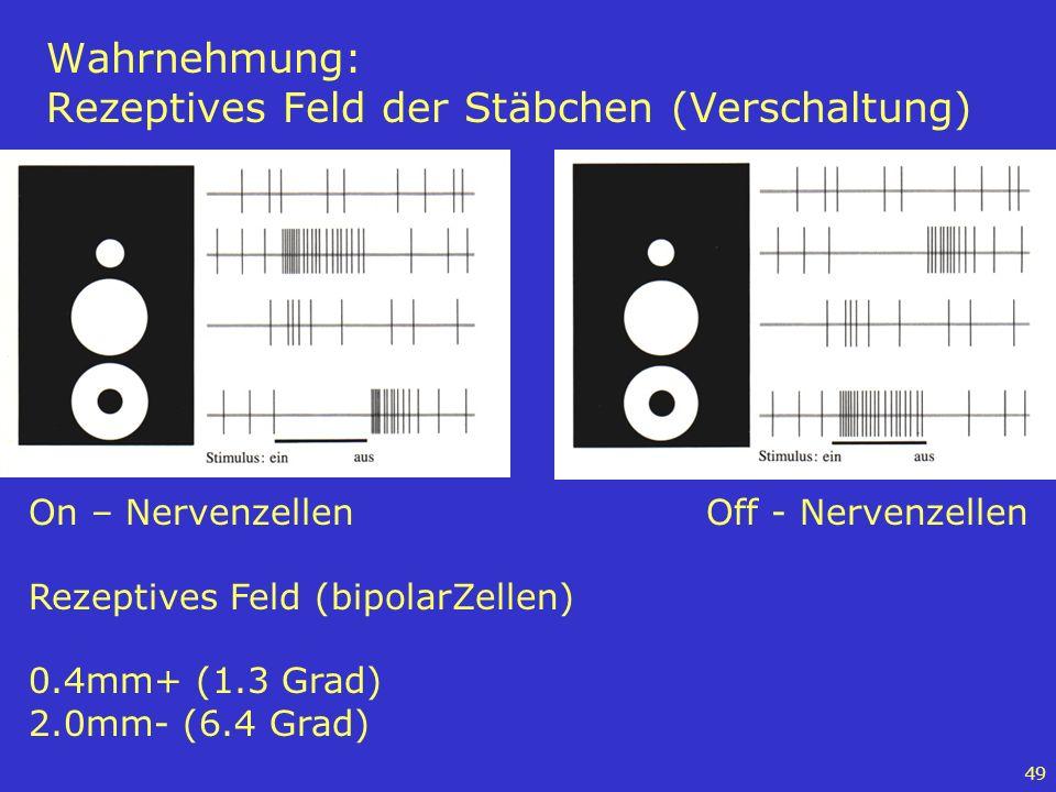 49 Wahrnehmung: Rezeptives Feld der Stäbchen (Verschaltung) On – Nervenzellen Rezeptives Feld (bipolarZellen) 0.4mm+ (1.3 Grad) 2.0mm- (6.4 Grad) Off