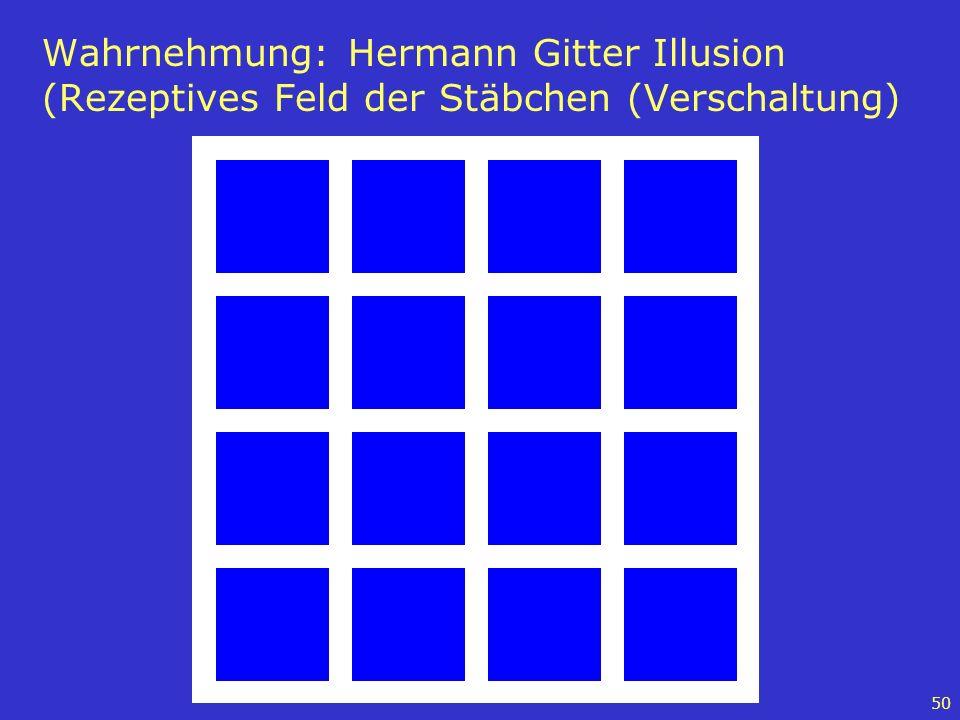 50 Wahrnehmung: Hermann Gitter Illusion (Rezeptives Feld der Stäbchen (Verschaltung)