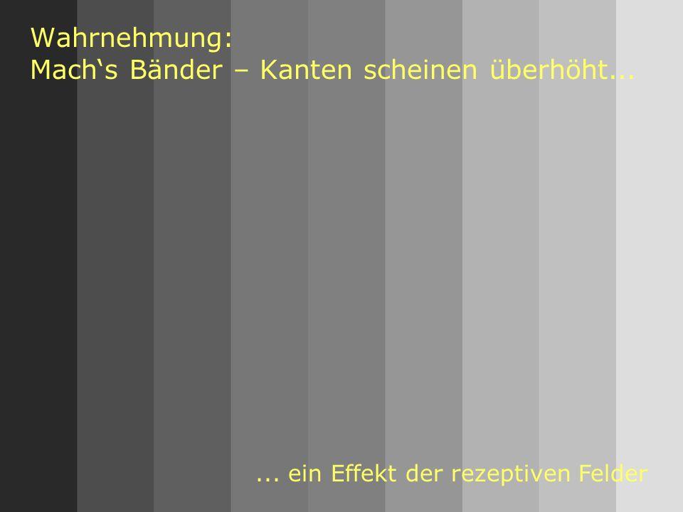 51 Wahrnehmung: Machs Bänder – Kanten scheinen überhöht...... ein Effekt der rezeptiven Felder