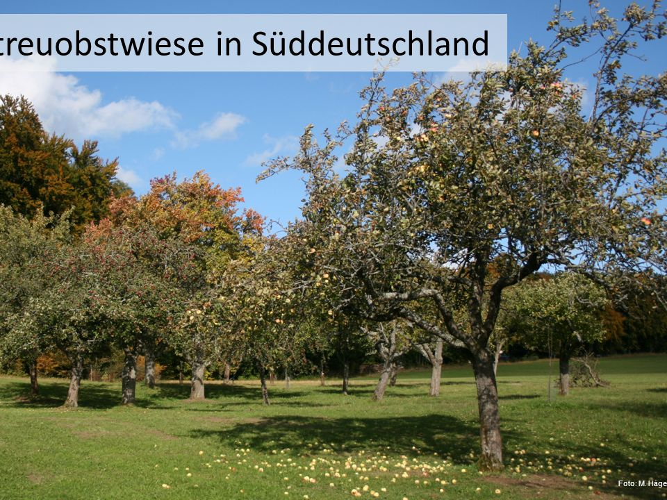 Streuobstwiese in Süddeutschland Foto: M. Hägele