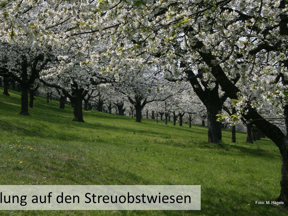 Frühlung auf den Streuobstwiesen Foto: M. Hägele