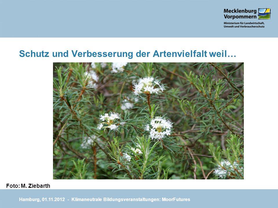 Schutz und Verbesserung der Artenvielfalt weil… Hamburg, 01.11.2012 - Klimaneutrale Bildungsveranstaltungen: MoorFutures Foto: M. Ziebarth