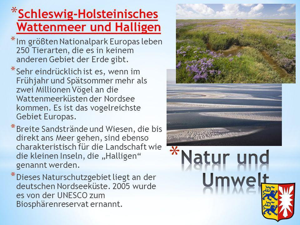 * Schleswig-Holsteinisches Wattenmeer und Halligen * Im gröβten Nationalpark Europas leben 250 Tierarten, die es in keinem anderen Gebiet der Erde gib