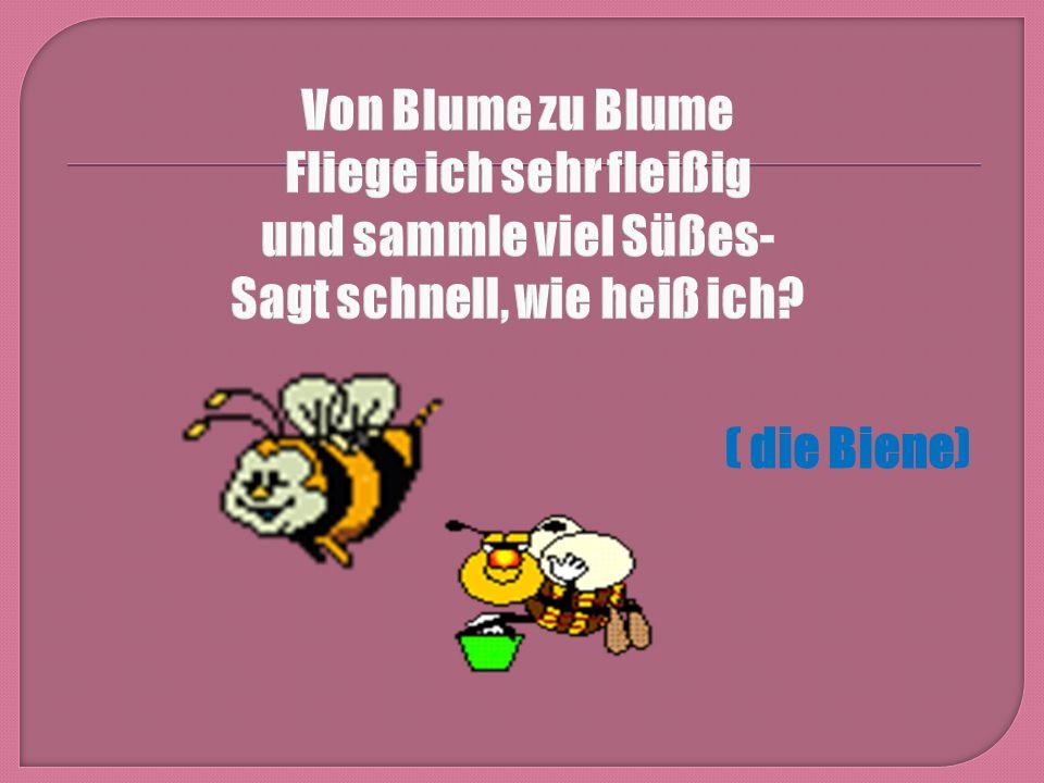 ( die Biene)
