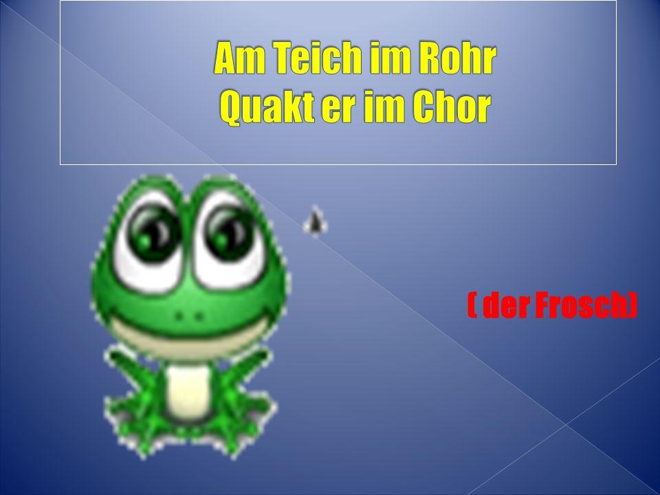 ( der Frosch)