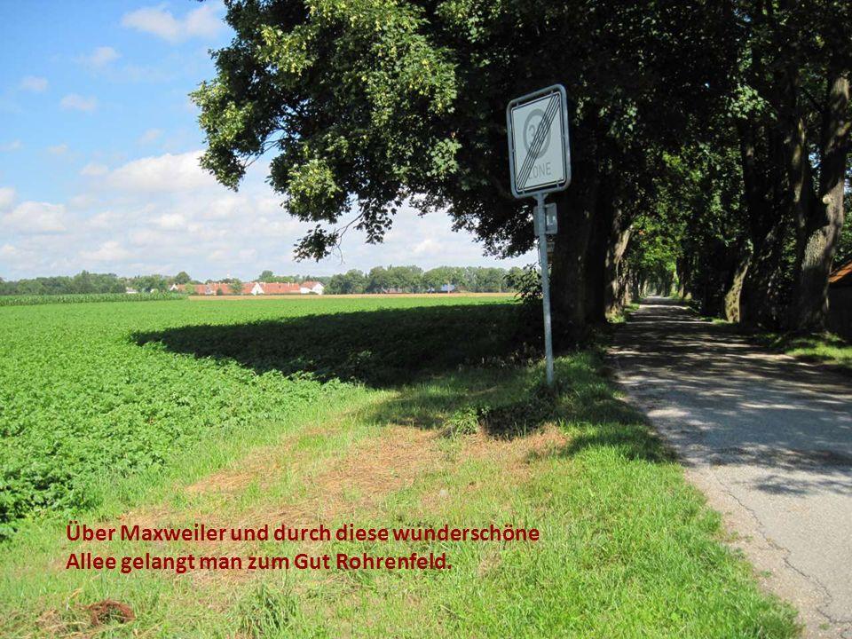 Über Maxweiler und durch diese wunderschöne Allee gelangt man zum Gut Rohrenfeld.