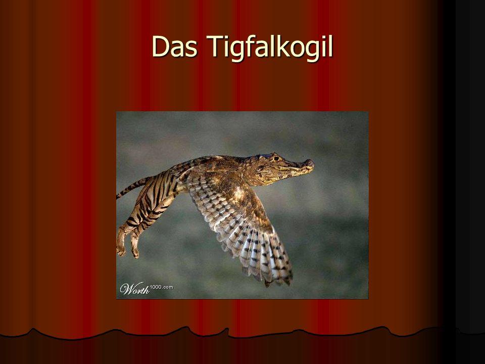 Achtung: Bei diesem Foto handelt es sich um eine raffinierte Fälschung! Aus einem ganz gewöhnlichen Katzenhirsch wurde hier ein anzüglicher Angora/Leg