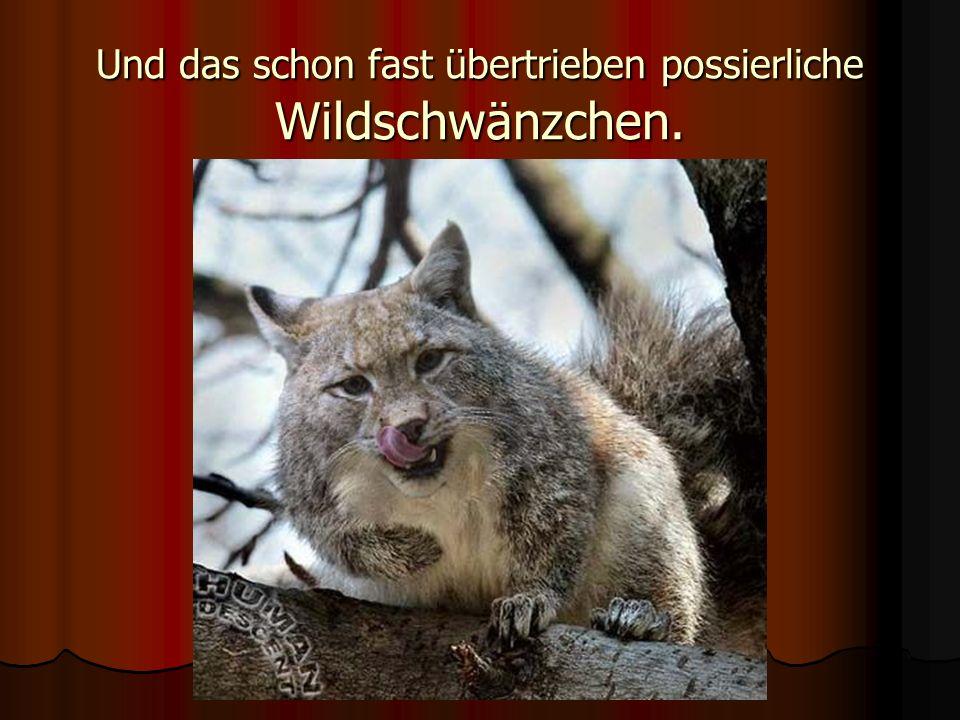 der wachsame Schwolf,