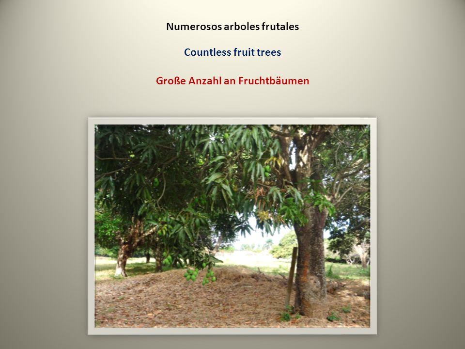 Numerosos arboles frutales Countless fruit trees Große Anzahl an Fruchtbäumen