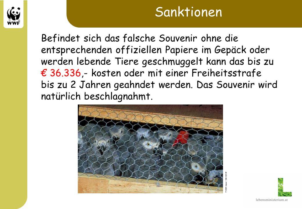 Sanktionen Befindet sich das falsche Souvenir ohne die entsprechenden offiziellen Papiere im Gepäck oder werden lebende Tiere geschmuggelt kann das bi