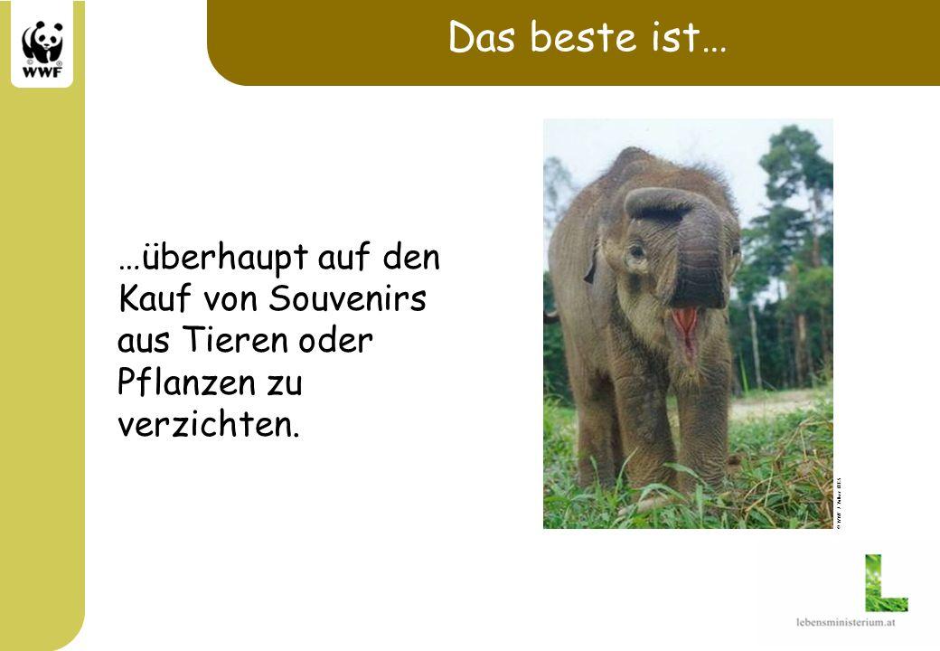 Das beste ist… …überhaupt auf den Kauf von Souvenirs aus Tieren oder Pflanzen zu verzichten. © WWF / Volker KEES