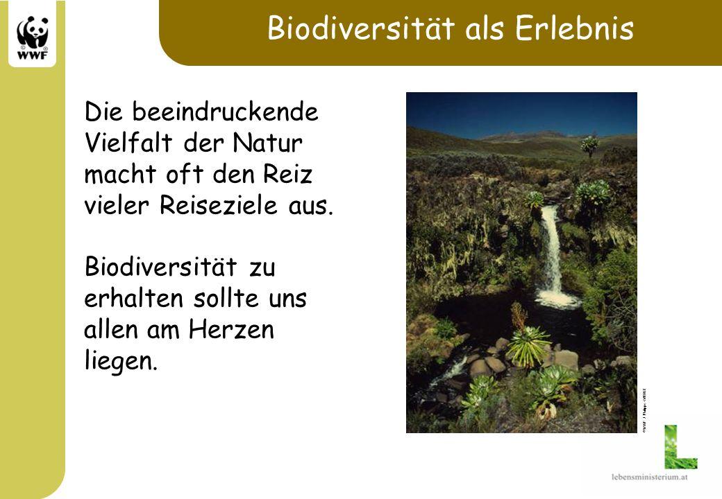 Biodiversität als Erlebnis Die beeindruckende Vielfalt der Natur macht oft den Reiz vieler Reiseziele aus. Biodiversität zu erhalten sollte uns allen