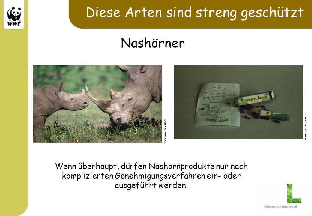 Diese Arten sind streng geschützt Wenn überhaupt, dürfen Nashornprodukte nur nach komplizierten Genehmigungsverfahren ein- oder ausgeführt werden. © W