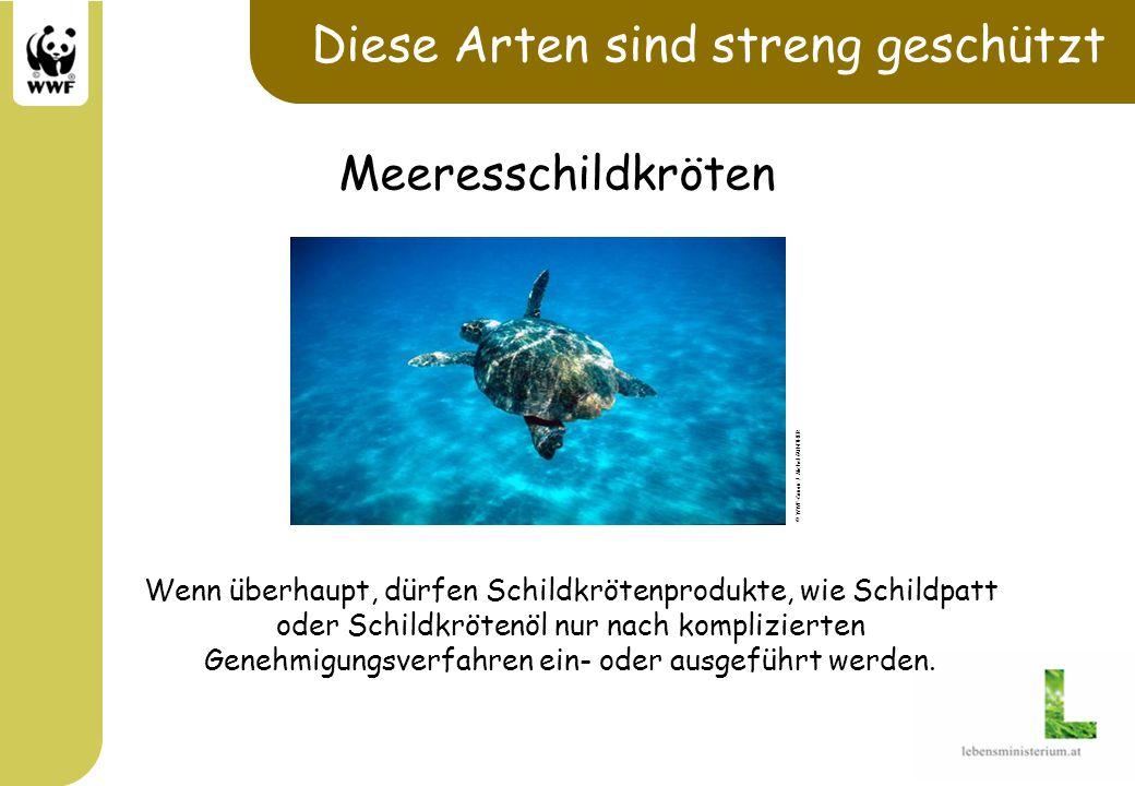 Diese Arten sind streng geschützt © WWF-Canon / Michel GUNTHER Meeresschildkröten Wenn überhaupt, dürfen Schildkrötenprodukte, wie Schildpatt oder Sch