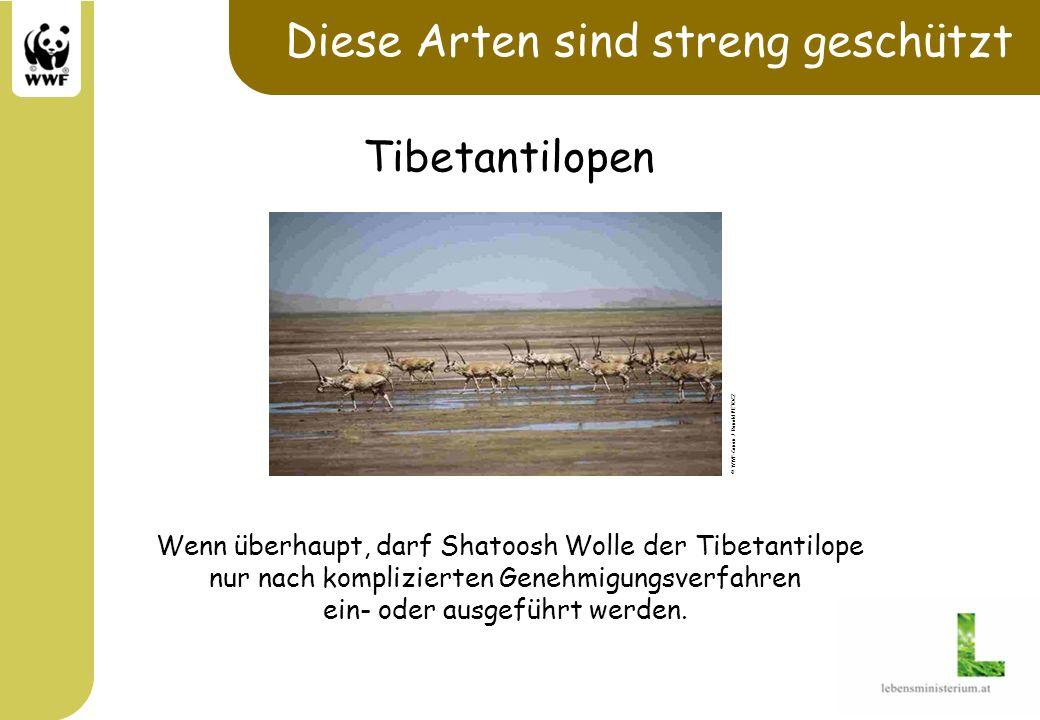 Diese Arten sind streng geschützt Wenn überhaupt, darf Shatoosh Wolle der Tibetantilope nur nach komplizierten Genehmigungsverfahren ein- oder ausgefü