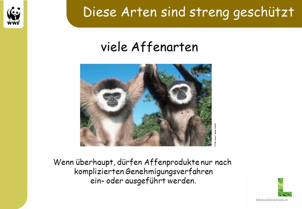 Diese Arten sind streng geschützt Wenn überhaupt, dürfen Affenprodukte nur nach komplizierten Genehmigungsverfahren ein- oder ausgeführt werden. © WWF